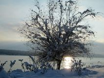 Snow and ice covered tree in the winter freezing day. River Danube environment, Futog Serbia.  royalty free stock photos