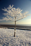 Snow and ice covered tree Stock Photos