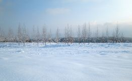 Snow and ice covered trees in the winter freezing day. River Danube environment, Futog Serbia. Snow and ice covered trees in the winter freezing day. River royalty free stock photos