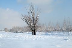 Snow and ice covered trees in the winter freezing day. River Danube environment, Futog Serbia. Snow and ice covered trees in the winter freezing day. River royalty free stock photography