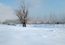 Snow and ice covered trees in the winter freezing day. River Danube environment, Futog Serbia. Snow and ice covered trees in the winter freezing day. River royalty free stock images