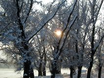Snow and ice covered trees in the winter freezing day. River Danube environment, Futog Serbia.  royalty free stock photography