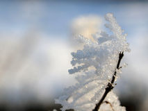 Snow and Ice Crystals on Plants Royalty Free Stock Photography