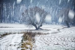 Snow and ice on the field, winter Royalty Free Stock Images