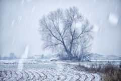 Snow and ice on the field, winter Royalty Free Stock Photos