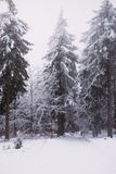 Snow and ice in the forest, Winter background stock images