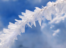 Snow and Ice Formation. Macro of delicate ice and snow formation on plant stalk Stock Photography