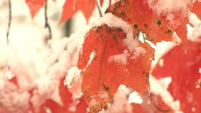 Snow and ice on leaves stock footage