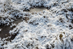 Snow and ice in a nature area from close Royalty Free Stock Image