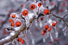 Snow and Ice Storm stock image