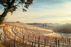 Snowy morning in the vineyard. Snow and ice in the vineyard of Friuli, Italy royalty free stock photos