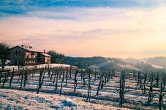 Snowy morning in the vineyard. Snow and ice in the vineyard of Friuli, Italy royalty free stock images