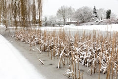 Snow and ice on water of pond. Snow landscape with snow and ice on water of pond royalty free stock photo