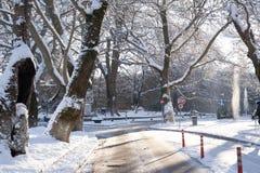 Snow ice winter season trees road in Ioannina city Greece. Snow ice forst winter season trees road in Ioannina city Greece stock photography