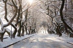 Snow ice winter season trees road in Ioannina city Greece. Snow ice forst winter season trees road in Ioannina city Greece stock image