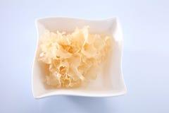 Snow jelly fungus Royalty Free Stock Photo