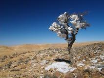 Snow in jordan. Fantastic and unusual view of snow on a tree in Jordan's desert Stock Photos