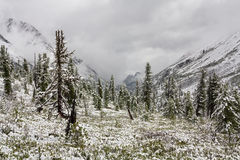 Snow in June in mountains Royalty Free Stock Images