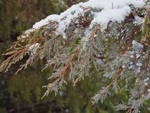 Snow on Juniper Branches and Berries. Horsethief Canyon State Wildlife Area in western Colorado has scenic views, migratory birds, and diverse wildlife royalty free stock photo