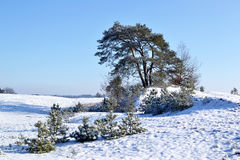Snow on the Kootwijkerzand. Stock Images