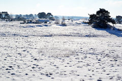 Snow on the Kootwijkerzand. Royalty Free Stock Photography