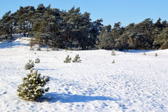 Snow on the Kootwijkerzand. Stock Photo