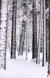 Snow laden trees royaltyfri foto