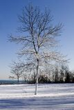 Snow laden winter tree. Against a blue sky and lake Stock Photo