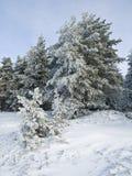Snow Landscape Stock Image