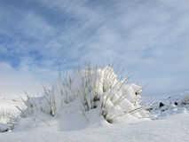 Snow landscape. A grass tuft covered with snow against a blue sky with clouds Stock Photos