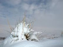 Snow landscape. A grass tuft covered with snow against a overcast sky Royalty Free Stock Photography