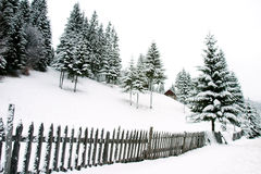 Snow landscape Royalty Free Stock Image