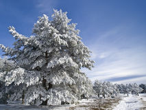 Snow landscape. Winter landscape, with a big tree in the foreground Royalty Free Stock Photo