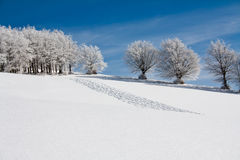 Snow landscape. With frozen trees and traces on the snow Royalty Free Stock Images