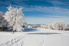 Snow landscape. With frozen tree and traces on the snow Stock Images