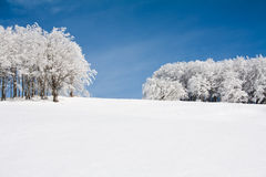 Snow landscape. With frozen trees Stock Photography