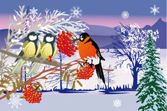 Snow landscape and birds Stock Image