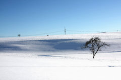 Snow landscape and a tree Royalty Free Stock Photo