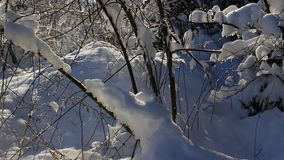 Snow landscape stock footage