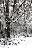 Snow landscape of winter woodland trees Stock Photos