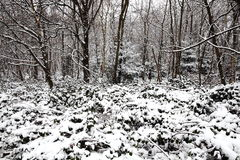 Snow landscape of winter woodland trees Stock Photography