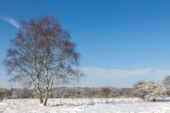 Snow landscape wtih a white birch. A snbow landscape with a white birch on the foreground at the Veluwe in te Netherlands stock photos