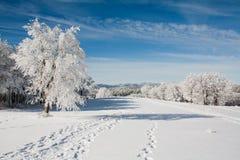 Snow landskap arkivbilder