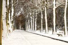 Snow lane Royalty Free Stock Image