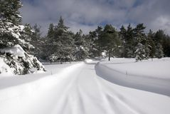 Snow Lane. A forest lane covered with virgin snow royalty free stock image