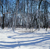 Snow Lashed Trees and Shadows Royalty Free Stock Photos