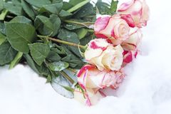 A bouquet of beautiful roses in the snow. Reference picture. On the snow lay a bouquet of beautiful pink and white roses. Reference picture stock photos