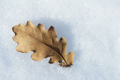 Snow and leaf Stock Image