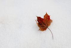 Snow and leaf Royalty Free Stock Photography
