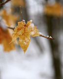 Snow leaf Royalty Free Stock Photography